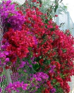 Playa Flamenca plants