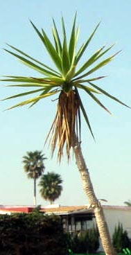 Playa Flamenca plants
